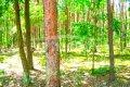 Zdjęcie do ogłoszenia: Działka leśna Hornówek, ul. Malinowa  550  zł/m 2  leśna