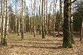 Zdjęcie do ogłoszenia: Działka leśna Jedlicze A, ul. Brzóski  66 , 67  zł/m 2  leśna